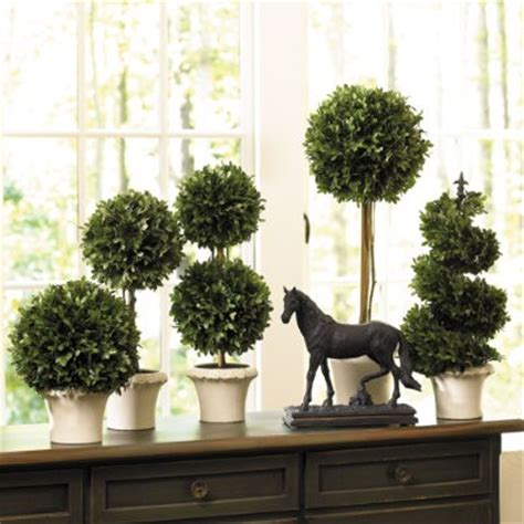 topiary design eye for design decorating with topiary for your home