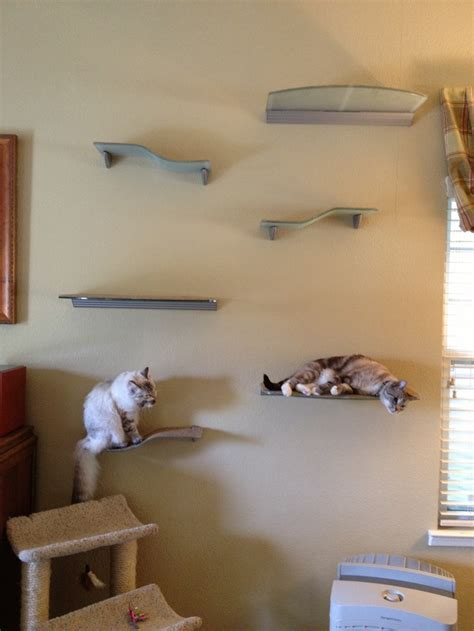 cat wall shelves climbing 1000 images about cats on pet