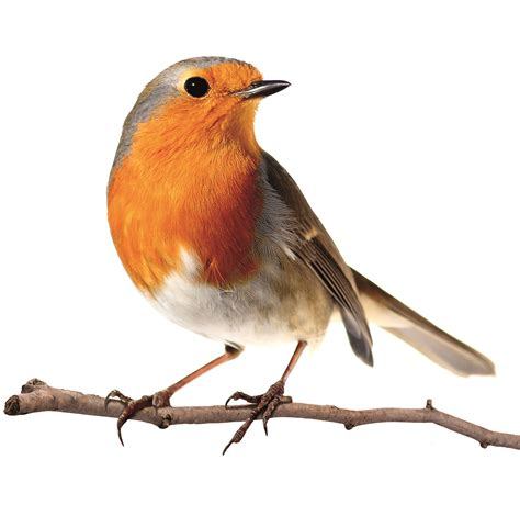 18 amazing facts about birds love the garden