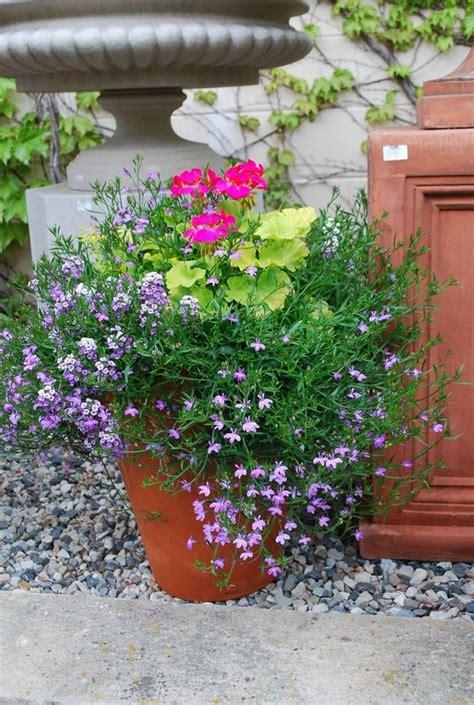 lavender container garden geranium and lavender lobelia