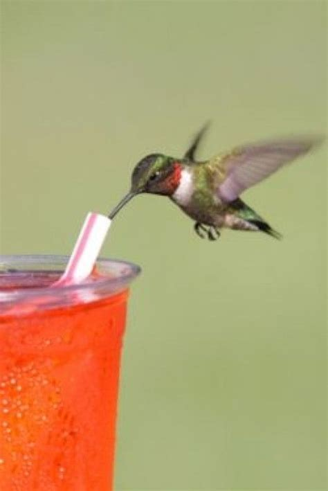 how to make hummingbird food an easy nectar recipe