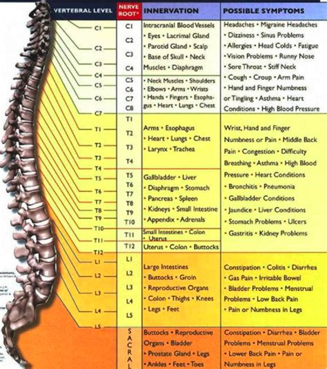 list of sections affected 10 things most people don t know about chiropractic