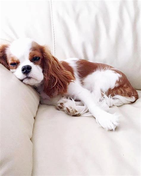 cani da appartamento per bambini cani piccola taglia le 36 razze di cani piccoli perfette