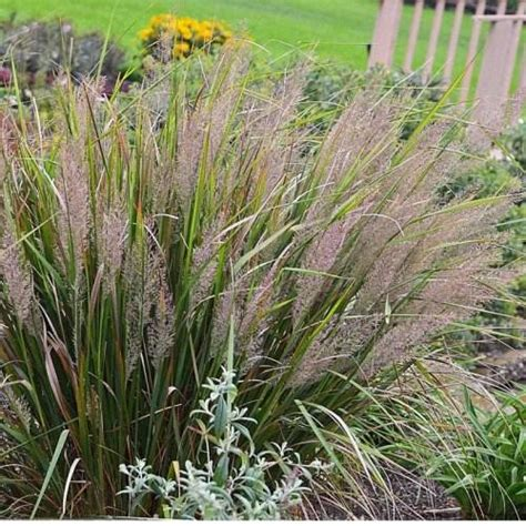 best grass for shade and sandy soil decor references