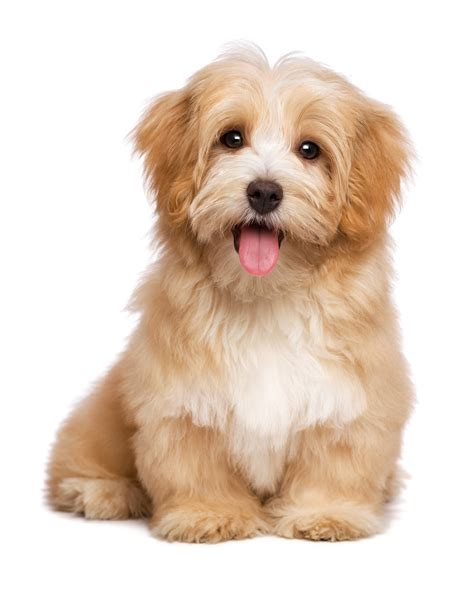dogs in care bladder stones in dogs by professional pet sitting etcprofessional pet sitting etc