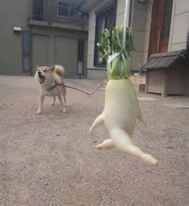 can dogs radishes 15 fruits and vegetables that look like something else