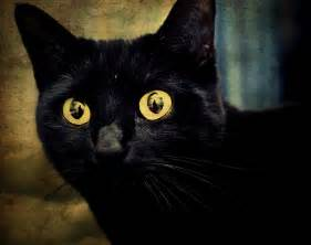 halloween superstition why black cats are considered bad