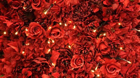 wallpaper tumblr red rose red roses backgrounds wallpaper cave
