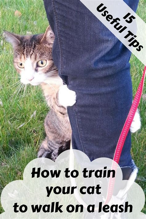 how to an on a leash how to your cat to walk on a leash zoomzee org