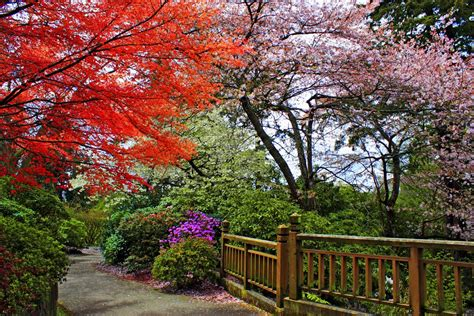 Springs Rhododendron Garden by Panoramio Photo Of Springs Rhododendron Garden