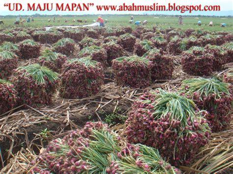 Jual Bibit Bawang Merah Jawa Timur pusat jual beli bawang merah kota nganjuk jawa timur
