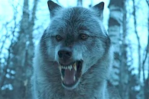 Winning Of Thrones Loup by Did Of Thrones Just Preview An Arya Nymeria Reunion Trailer Zimbio