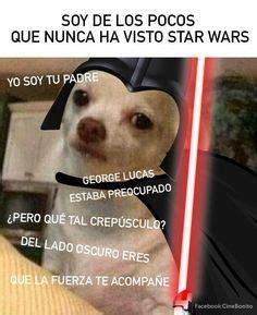 Memes De Chihuahua - 17 mejores ideas sobre chihuahua enojado en pinterest