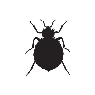bed bug removal service professional bed bug removal services