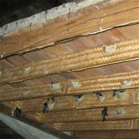 membuat rumah burung walet sarana perlengkapan rumah walet b max pelapis sirip