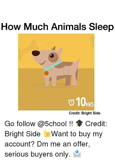 how much credit do i need to buy a house 25 best memes about animal sleeping animal sleeping memes