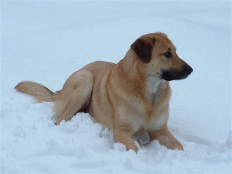 rare dog breeds puppies top 10 rare dog breeds