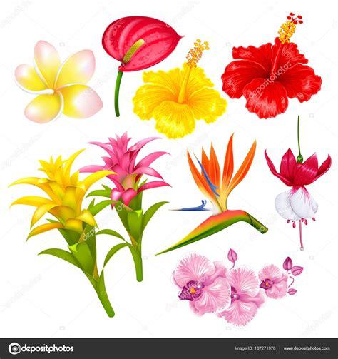 immagini di fiori esotici set di fiori esotici tropicali vettoriali stock