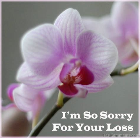sorry for your loss quotes sorry for your loss quotes quotesgram