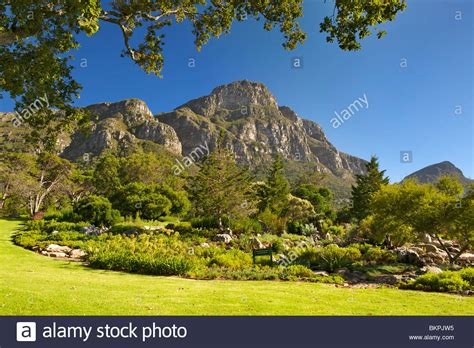 View Of Kirstenbosch Botanical Gardens And The Back Of Cape Town Botanical Gardens