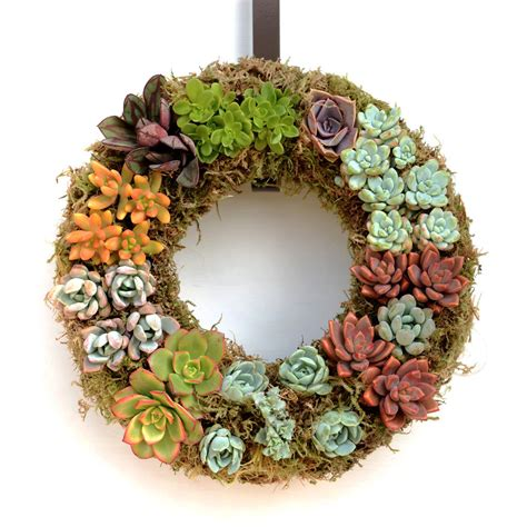 how to make succulent wreaths succulent care tips for