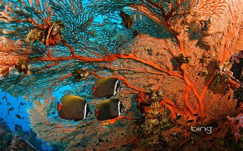 bing imagenes wallpapers full hd paisajes fish bing 1920x12 fondos de pantalla gratis