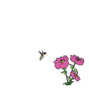 gif fiori animati emoticons animated gifs collections animated flowers