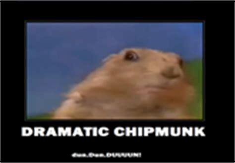 Chipmunk Meme - dramatic chipmunk know your meme