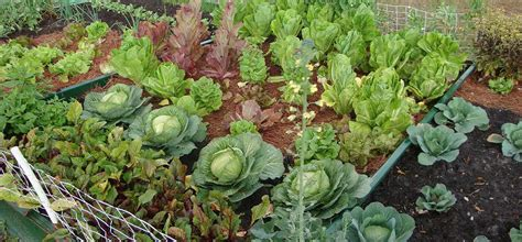 how to prevent weeds in vegetable garden kill weeds in vegetables gardens get rid of your veggie