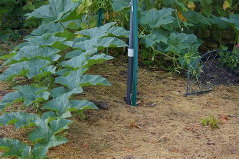 why i mulch with grass clippings in my southwest idaho garden