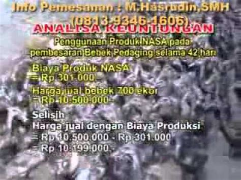 Jual Dod Bebek Peking Yogyakarta budidaya ternak bebek peking peluang usaha bikin kaya