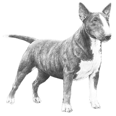 target breed target breed www pixshark images galleries with a bite