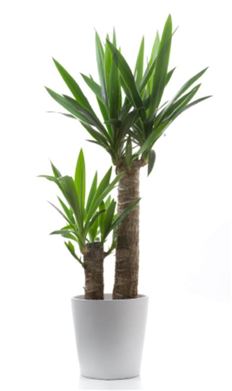 Tropical Indoor Plant Identification - tropical plants liget plantscaping
