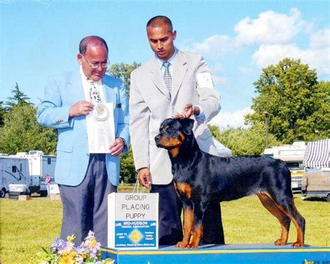 free puppies on island top quality rottweiler show dogs on island island free classifieds