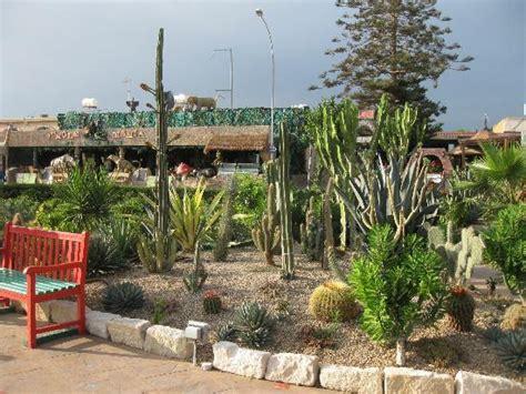 mexican garden tequila mexican garden ayia napa restaurant reviews