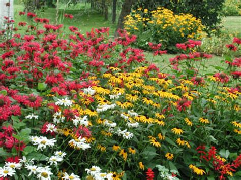 Flowers For Butterfly Garden Butterfly Gardening Attracting Butterflies To Your Backyard