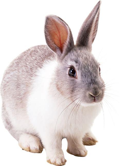 rabbit images rabbit png animal png rabbit and animal