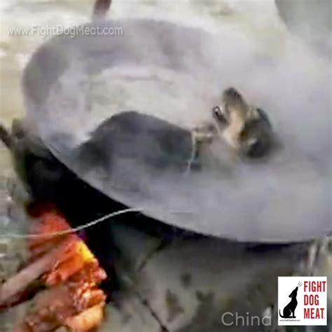 puppy alive china live boiled alive fight