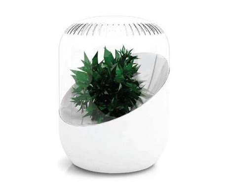 andrea plant based air purifier  green inventions