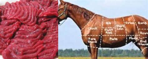 khasiat daging kuda  kesehatan manfaatcoid