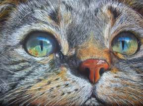 color drawing 30 beautiful cat drawings best color pencil drawings and