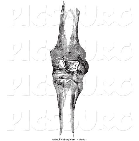sketchbook joint knee joint