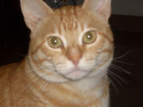 My Cat by File Tony My Cat Jpg