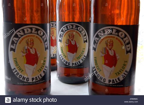 pictures of bier yorkies pictures of bier yorkies pictures of bier yorkies timothy