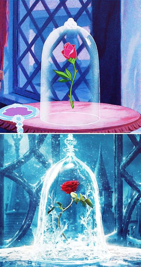 enchanted rose that lasts a year enchanted rose that lasts a year pinterest the world s