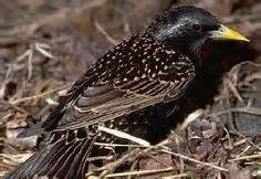 backyard birds of michigan nature on pinterest 41 pins