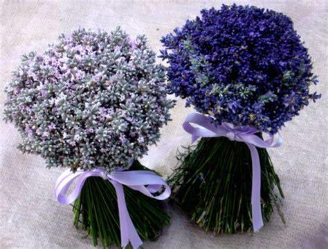 fiori di lavanda essiccati mazzi di lavanda freschi mazzi di lavanda essiccati per