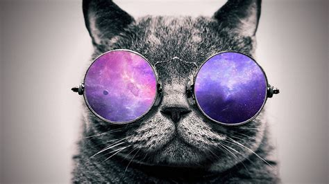 iphone wallpaper cat glasses artwork digital art cat glasses animals