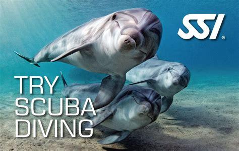 dive ssi scuba diving courses try scuba diving in cebu