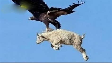 161 top 10 ataques de animales a personas imagenes fuertes ataque de animales salvajes ataques de animales salvajes